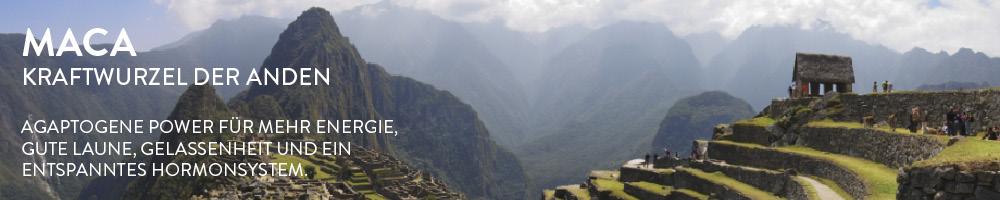 Maca - Meister der Anpassungsfähigkeit Der Ruf von Maca als machtvoller Kraftspender und libidosteigerndes Superfood reicht weit zurück in der Geschichte der Menschheit. Maca wurde jahrhundertelang medizinisch als Fruchtbarkeitsmittel für Menschen und Tiere benutzt. Der Legende nach konsumierten die Krieger der Inka Maca, um sich auf Schlachten vorzubereiten und sie grimmig und stark zu machen. Nachdem eine Stadt eingenommen war, wurde den Kriegern der Verzehr von Maca wiederum verboten, um die ansässigen Frauen vor der übermäßigen sexuellen Begierde der Männer zu schützen.