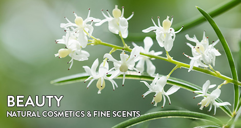 fragrance and beauty natural cosmetics fine fragrances for the senses