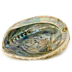 Abalone Räuchermuschel