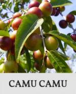 Button_CamuCamu